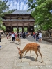 Viaje Japón 2019
